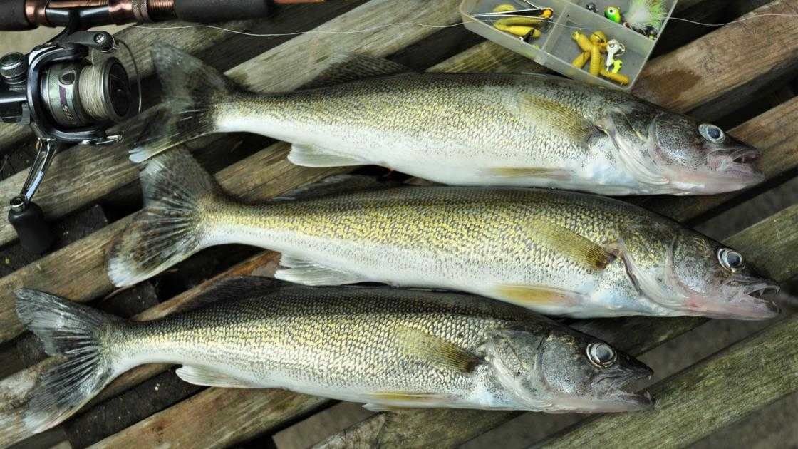 Washburn: Clear Lake walleyes launch July rampage