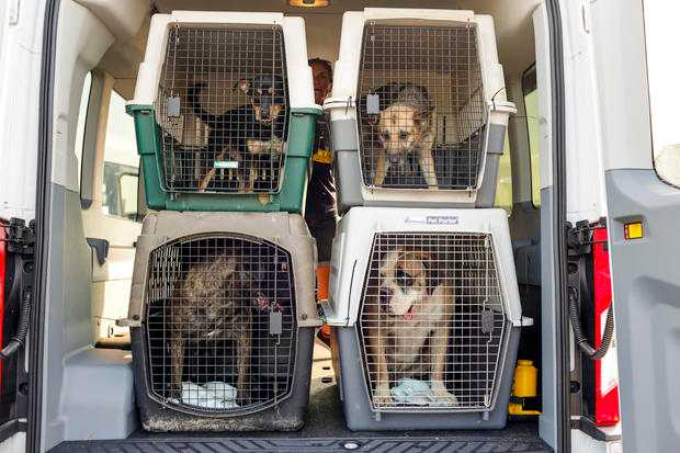 More than 120 dogs and pets rescued from Hurricane Barry's path