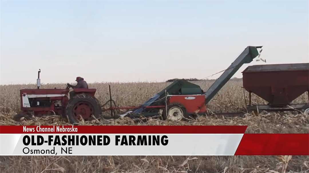 Osmond farmer uses old-fashoned equipment to harvest crop