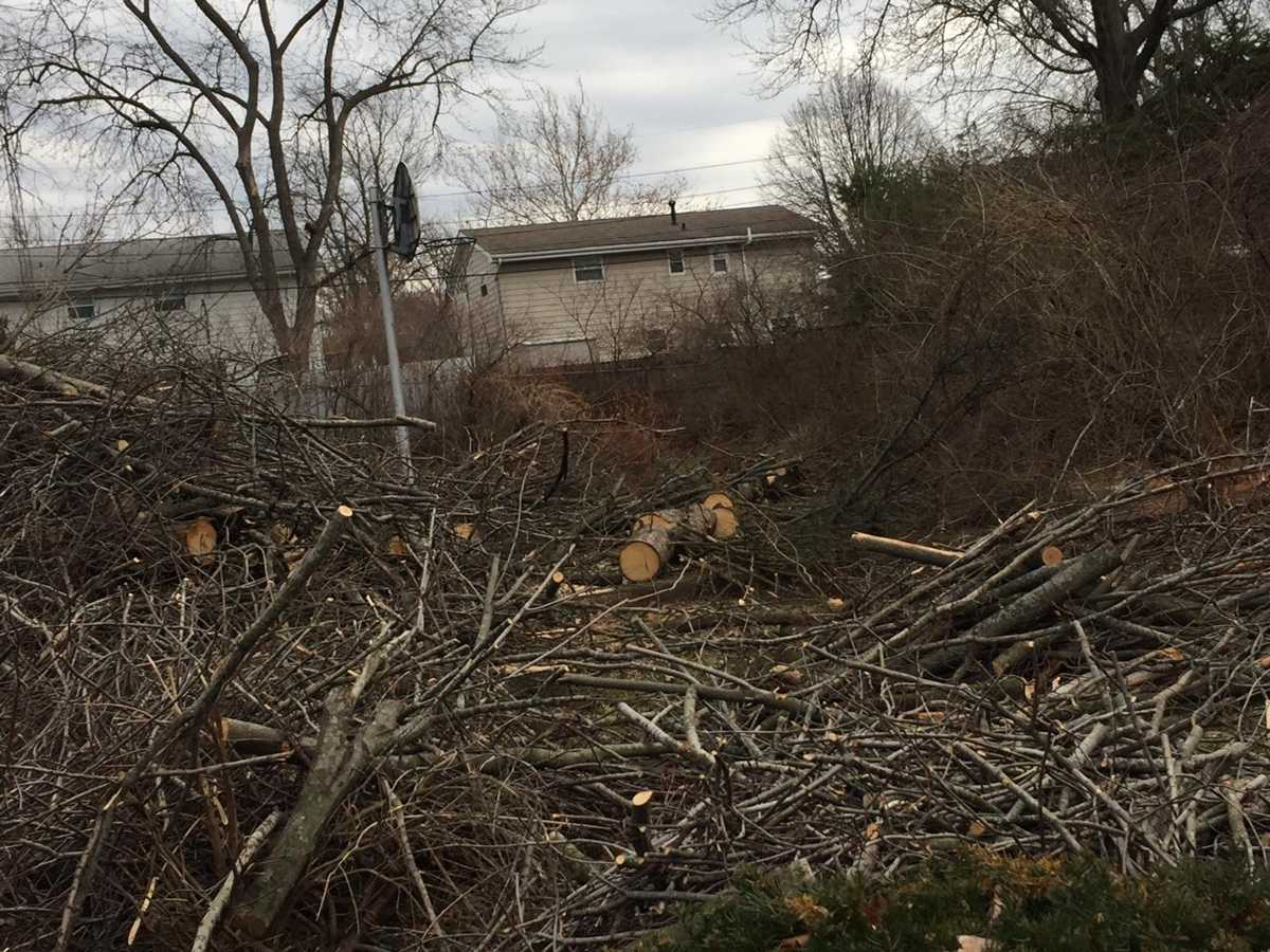 Luciano: Tree mess leaves two sides barking