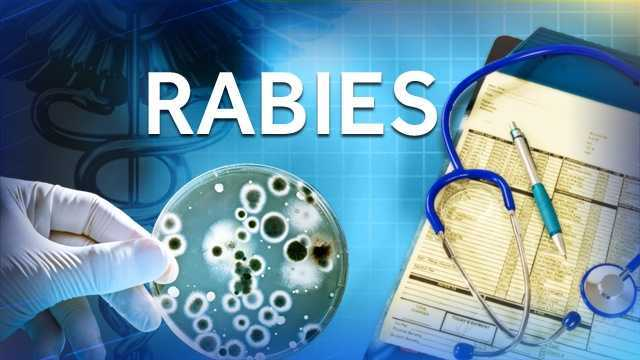 Raccoon found Saturday in Severna Park tests positive for rabies
