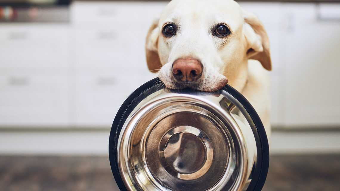 FDA investigating link between grain-free food and heart failure in dogs