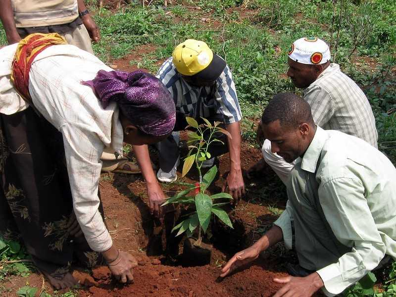 The African country that inspired more and more countries to plant billions of trees