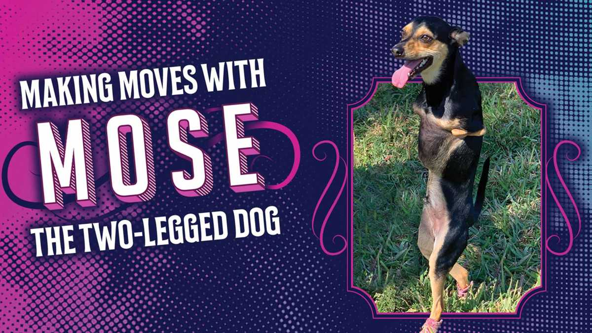 Making Moves With Mose, The Two-Legged Dog