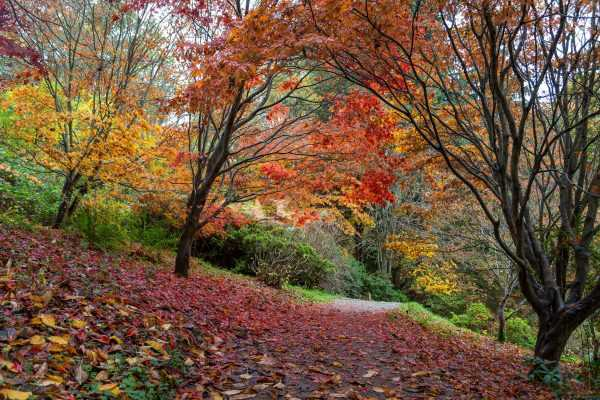 Winkworth Arboretum, the 'Museum of Trees' that celebrates the art of planting for autumn colour